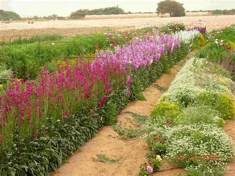 ornamental plants flowers ornamental plants