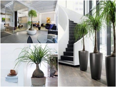 Plante Design D Interieur by 1000 Id 233 Es Sur Le Th 232 Me Plante D Int 233 Rieur Sur