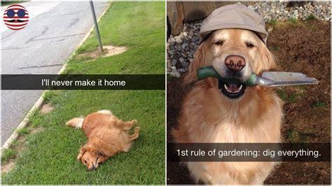 part   hilarious dog snapchats   impawsible