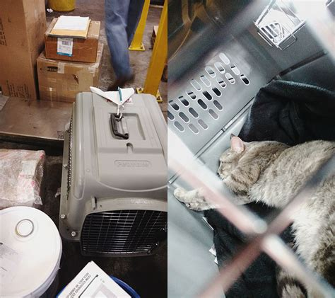 the flight from toronto to with a cat in cargo