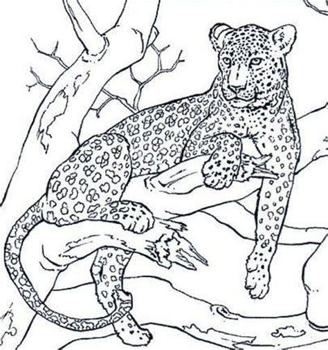 imagenes jaguar para dibujar como dibujar un jaguar facil imagui