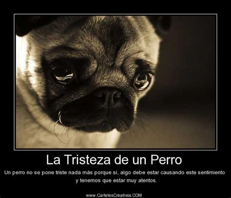 imagenes de amor algo triste la tristeza de un perro carteles creativos desmotivaciones