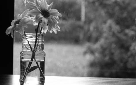 grayscale wallpaper flowers grayscale monochrome hd wallpapers