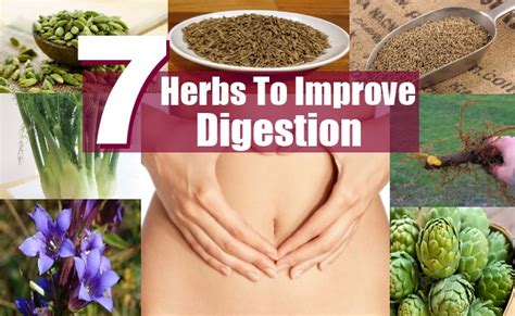 top 7 herbs to improve digestion diy health remedy