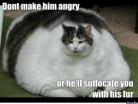 Funny Fat Memes - fat cat meme meme pinterest fat cat meme and meme