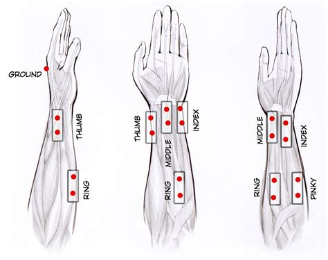 sections of the arm experiment signal classification