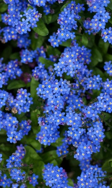 wallpaper  nots flowers small blue bright