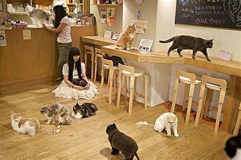 Feline Inspired Speakers From Japan by Japan S Strangest Theme Restaurants 11 09 12 Cheap Hype