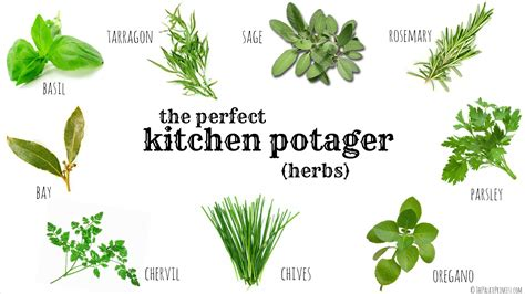 kitchen herbs creating the perfect indoor kitchen potager