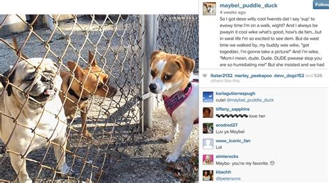 puppy captions for instagram favorite dogs on instagram dogs in the cle