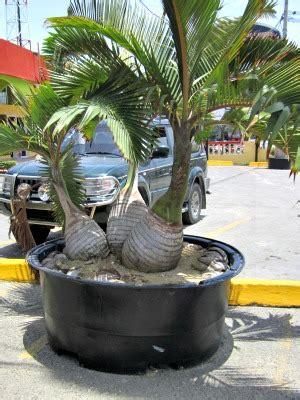 Statue Home Decor Bottle Palm Tree Unique And Easy