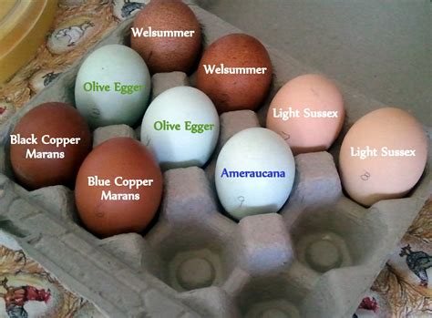 what color eggs do chickens lay brown chicken eggs