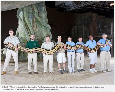 guinness book of world records pictures guinness world records 2011 damn cool pictures