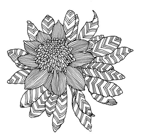 coloring pages of australian flowers my backyard on behance