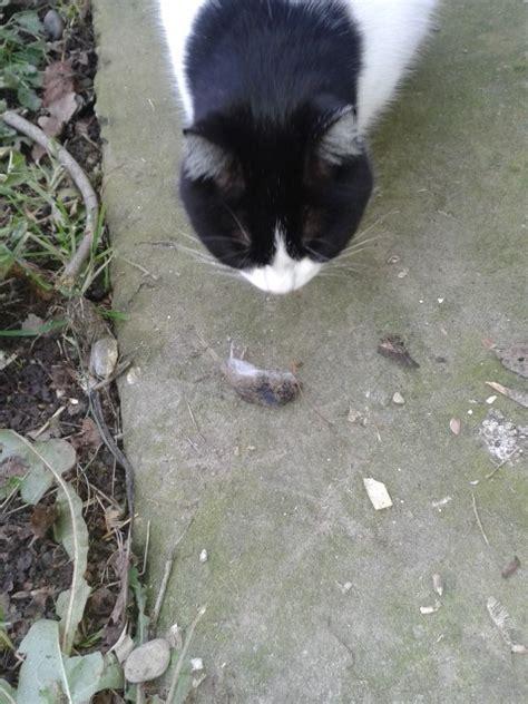 come allontanare i topi dal giardino allontanare i topi senza ucciderli muccapazza