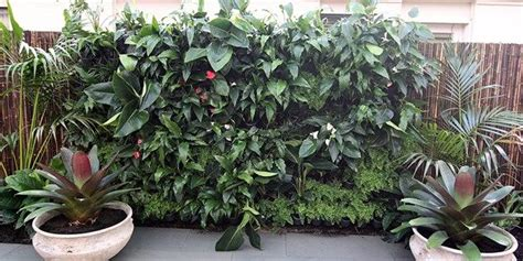 how to build a vertical garden holman greenwall vertical