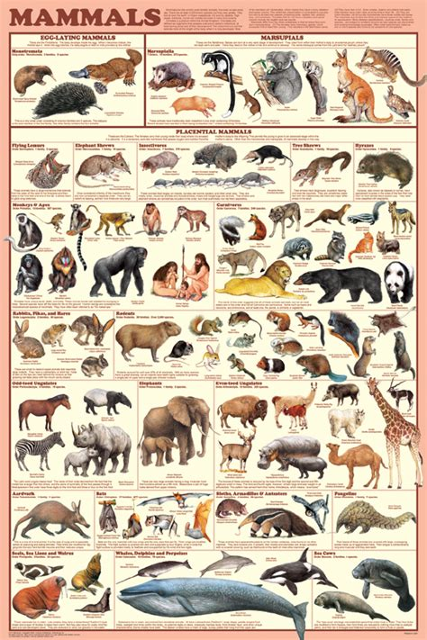 printable animal poster animal posters pictures prints largest selection available