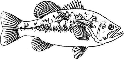 bass fish coloring pages free bass fish outline coloring page coloring pages