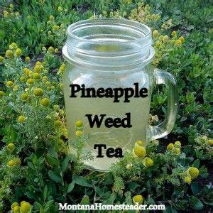 Chamomile Tea Detox Thc by 17 Best Images About Marijuana On