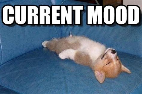 Mood Meme - current mood laid out dog meme on memegen