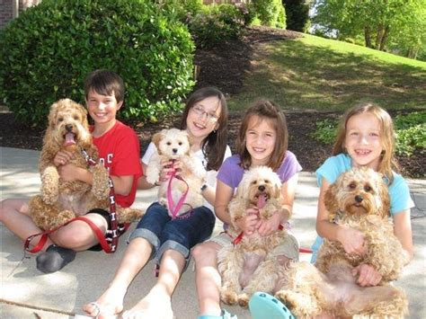 puppies for sale columbia sc 1000 ideas about cockapoo puppies for sale on cockapoo puppies