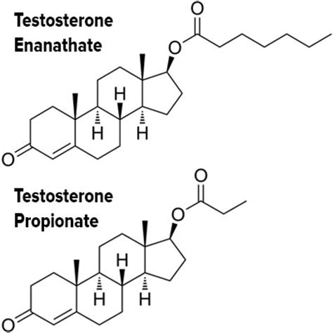 testosterone definition of testosterone by medical what to expect from sarms ostarine results