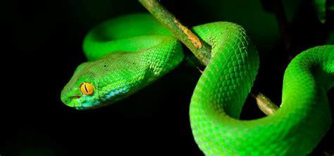 imagenes impresionantes de serpientes serpiente ofidio qu 233 comen d 243 nde viven tipos de