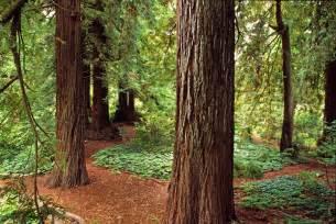 garden plant collections conifers san francisco