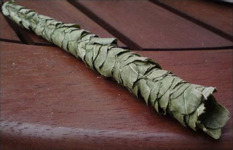 Cigar Nest Green gloucestershire fascinating leaf creation found