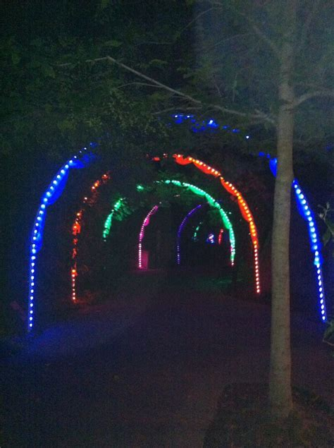louis zoo lights lights at the st louis zoo