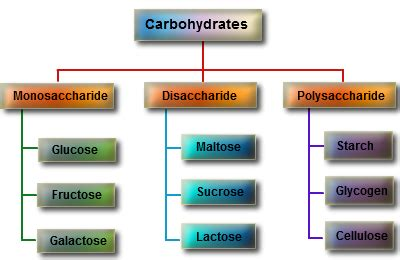 1 which carbohydrates are described as simple and which are complex carbohydrates and structure thebiochemeffect