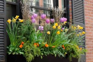 Planting window boxes flowers tips and ideas on how to plant a