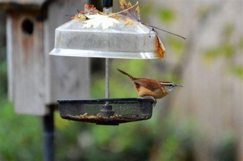 Backyard Bird Feeding by 61 Best Images About Backyard Bird Feeding In Ne Atlanta