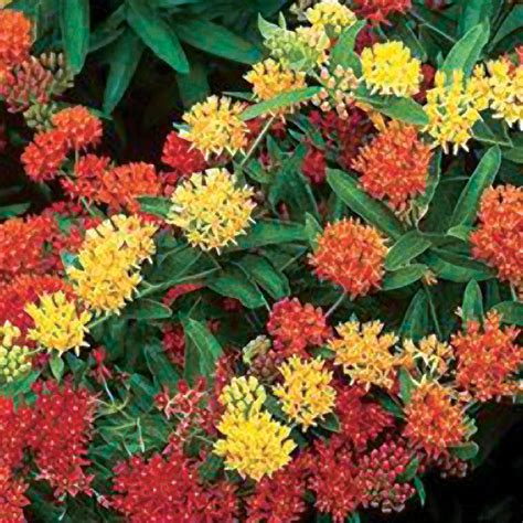 deer resistant plants deer resistant plants official blog of park seed
