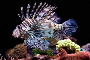 Best Plants For Tropical Aquarium - converting a freshwater aquarium to saltwater algone