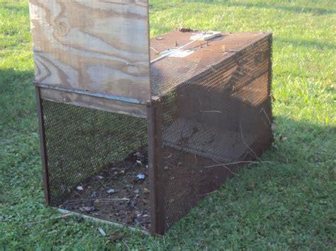 Handmade Traps - live traps backyard chickens