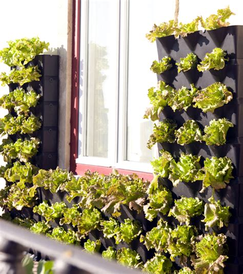 vertikaler garten balkon mini vertical garden for balcony patio or kitchen