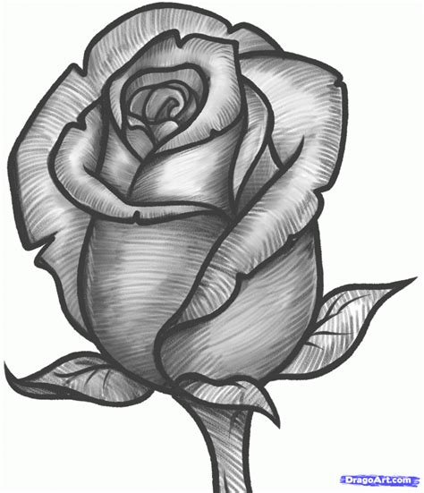 drawing pictures beautiful pencil drawings of roses drawing ideas