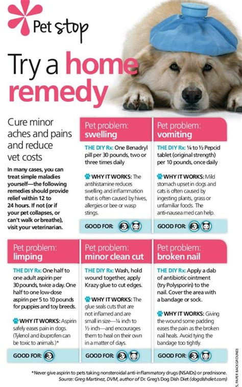 home remedies for dogs home remedies for dogs this is something i need to vets are expensive dogs