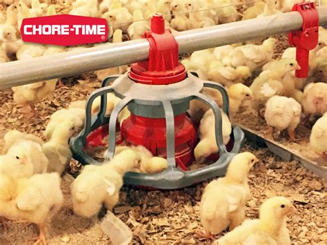 Chore Time Feeders revolution 174 floor flood broiler feeder feeders feeding systems broilers chore time
