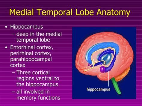 Medial Temporal Lobe Anatomy