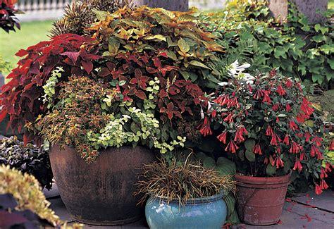 Potted Gardens Ideas Container Gardening Desain Rumah Minimalis