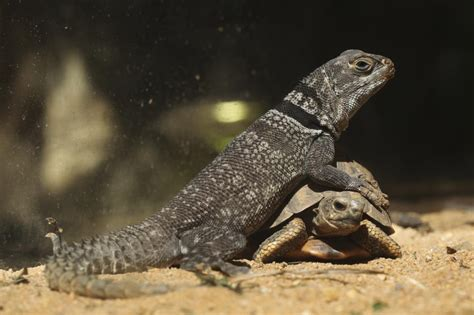 list   types  lizards  facts  pictures