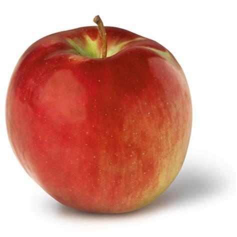 apple york home new york apple growers ny apple association