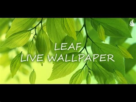 Leaf Live Wallpaper by Leaf Live Wallpaper Gallery