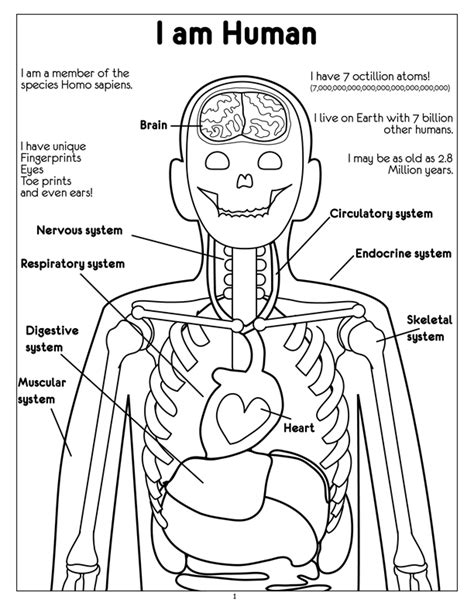 endocrine system coloring worksheet sketch coloring page