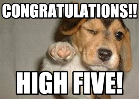Funny Congratulations Meme - congrats to the 2015 2016 pdp winners acadaos