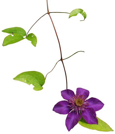 format gambar png arie cellular koleksi gambar bunga format png