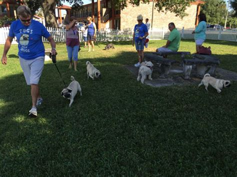 pugs in the city st augustine pugs in the city part 1 of 4 the pug