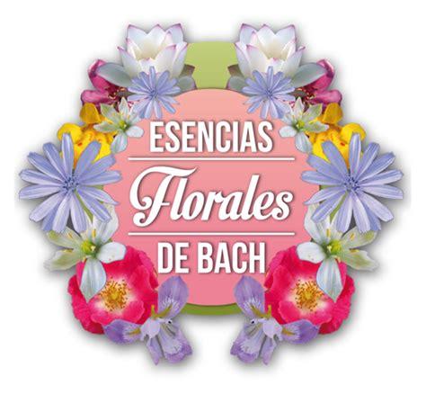 imagenes de flores de bach fofuras felinas flores de bach esencias florales gotas